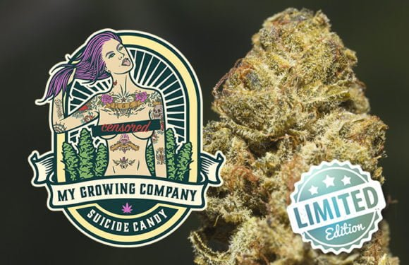 suicide-candy-cannabis cbd indoor my growing company legal in europe