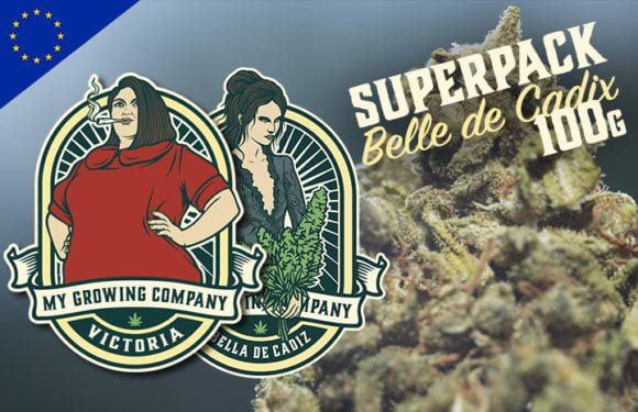boui boui a vivi my growing company belle de cadix indoor cannabis cbd