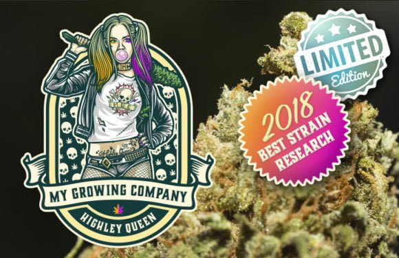 harlequin highley queen limited edition cannabis cbd my growing company