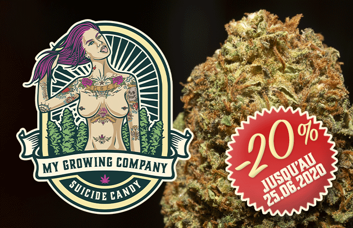 Suicide Candy Indoor - 20% sale