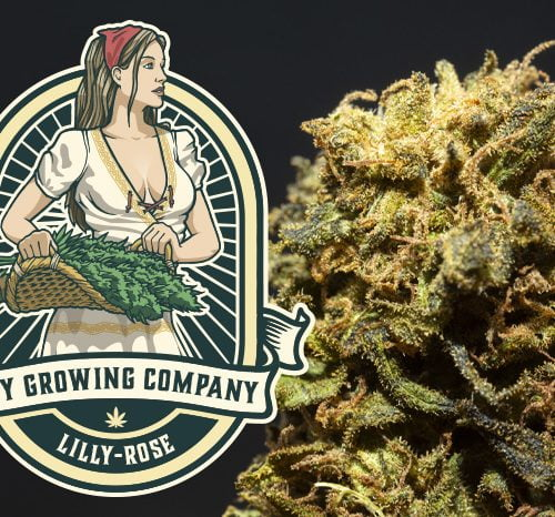Lilly-Rose CBD